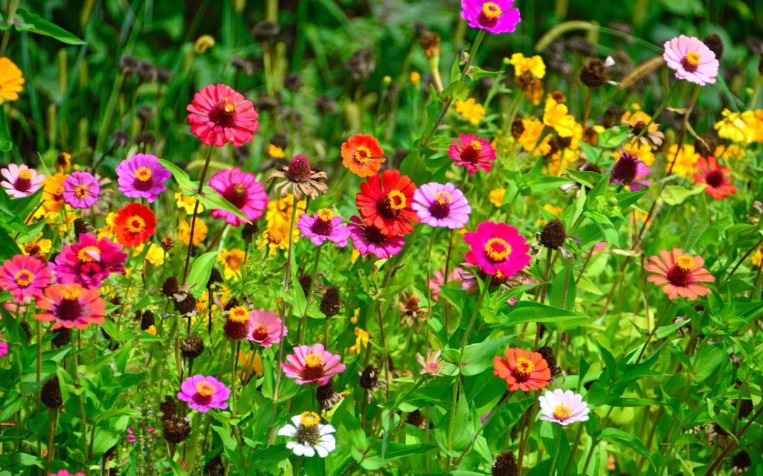 Little Changes That'll Make a Big Difference With Your Garden